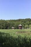 有两台老木风车的一个草甸 免版税库存照片