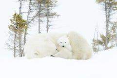 有两崽的北极熊母亲 库存图片