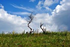 有两朵干燥树、草和花的草甸 免版税图库摄影