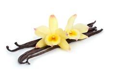 有两朵黄色兰花的香草荚 免版税库存照片