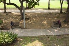 有两条人植物和长凳的胡同 免版税库存图片