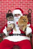 有两条小狗的圣诞老人爪子 免版税库存照片