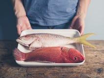 有两条异乎寻常的鱼的盘子 免版税库存照片