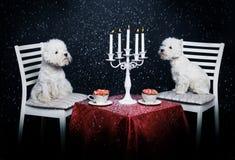 有两条逗人喜爱的狗日期 免版税库存照片
