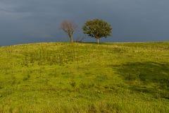 有两棵幽静树的农场在风暴-肯塔基以后 库存照片