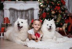 有两白色狗的女孩在圣诞树附近 库存图片
