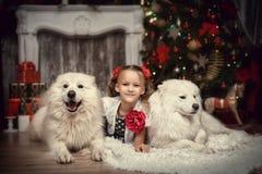 有两白色狗的女孩在圣诞树附近 库存照片