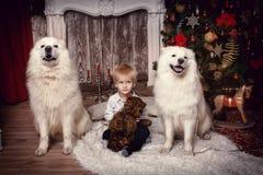 有两白色狗的男孩在圣诞树附近 库存照片