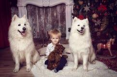 有两白色狗的男孩在圣诞树附近 免版税图库摄影