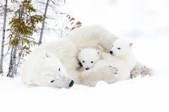 有两崽的北极熊母亲 免版税库存图片