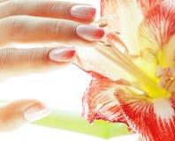 有举行红色花孤挺花关闭的桃红色Ombre设计修指甲的秀丽精美手隔绝了温暖的宏指令 免版税库存照片