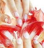 有举行花孤挺花关闭的桃红色Ombre设计修指甲的秀丽精美手隔绝了温暖的宏指令 免版税图库摄影