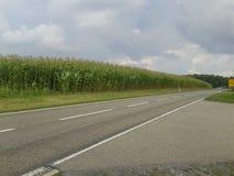 有云彩的玉米种植园 免版税库存图片