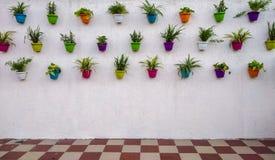 有五颜六色的垂悬对此的植物和罐的白色砖墙 库存照片