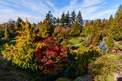 有五颜六色的树和灌木的,绿色草坪,桥梁树木园 图库摄影