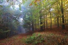 有五颜六色的树的有雾的不可思议的秋天森林 免版税库存照片