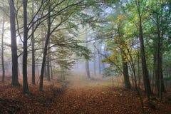 有五颜六色的树的有雾的不可思议的秋天森林 库存图片