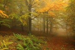 有五颜六色的树的有雾的秋天森林 免版税库存图片