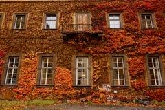 有五颜六色的橙色和红色秋叶的墙壁 库存照片
