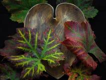 有五颜六色的秋天葡萄树的心形的木碗离开 库存图片