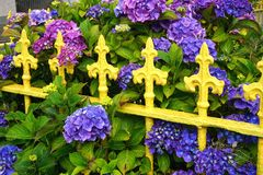 有五颜六色的紫色花的葡萄酒黄色铁篱芭 免版税库存照片