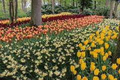 有五颜六色的郁金香的美丽的森林庭院 图库摄影