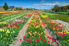 有五颜六色的郁金香的花园在阿姆斯特丹,荷兰,欧洲附近调遣 库存图片