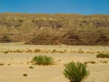 有些灌木在沙漠 库存图片