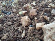有些石头 库存照片