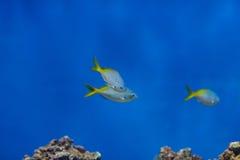有些鱼 库存照片