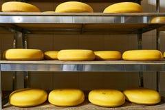 有产品架子的乳酪厂仓库  库存照片