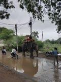 有人和动物宠物的印度路 库存图片