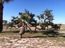 有人的特点的树在西部得克萨斯 免版税库存图片