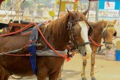 有人的马支架在Wat的Phra Lampang Lampa 库存图片
