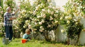 有从事园艺在庭院里的孙子的老人 花地面 资深花匠 父亲和儿子一起生长花 股票视频