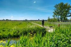 有他的护羊狗和绵羊的一位牧羊人在领域的一好日子接近鹿特丹,荷兰 图库摄影