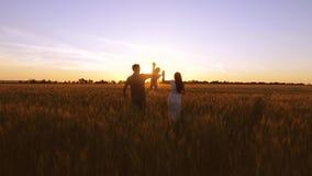 有他的父母的孩子走领域用在金黄日落光芒的麦子  股票视频