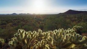 有仙人掌的多种类型的仙人掌森林在沙漠 免版税库存图片