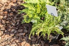 有价牌的年幼植物在园艺中心,特写镜头 图库摄影