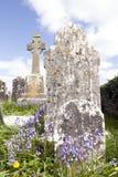 有会开蓝色钟形花的草的老古老爱尔兰凯尔特坟园 免版税库存照片