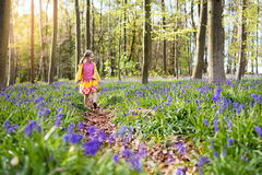 有会开蓝色钟形花的草花的孩子在春天森林里 免版税库存照片