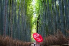 有伞的,Sagano的竹森林年轻女人 库存图片