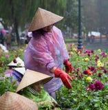 有传统圆锥形帽子的亚裔花匠照料植物学庭院 免版税库存照片