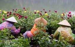 有传统圆锥形帽子的亚裔花匠照料植物学庭院 图库摄影