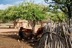 有传统小屋的Himba村庄在埃托沙国家公园附近在纳米比亚 库存照片