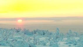 有低植被的斯诺伊森林在朝阳的背景中 股票录像