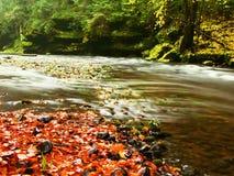 有低级的山河水,与五颜六色的山毛榉、白杨木和槭树叶子的石渣 新鲜的绿色生苔石头和冰砾 免版税库存图片