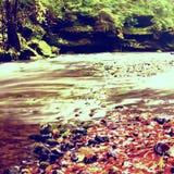 有低级的山河水,与五颜六色的山毛榉、白杨木和槭树叶子的石渣 新鲜的绿色生苔石头和冰砾 库存图片