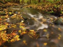 有低级的山河水,与第一片五颜六色的叶子的石渣 生苔岩石和冰砾在河岸 免版税库存照片