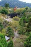 有佐仓树的路和寺庙在日本 免版税库存照片
